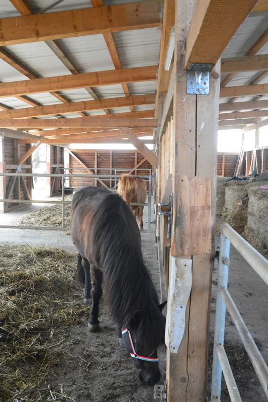 Pferdepension mit einem großzügigen Offenstall