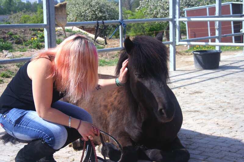 Pferdegestütztes Traing in Fröttstädt
