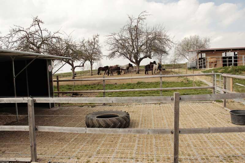 Pferdepension-Bewegungskoppel