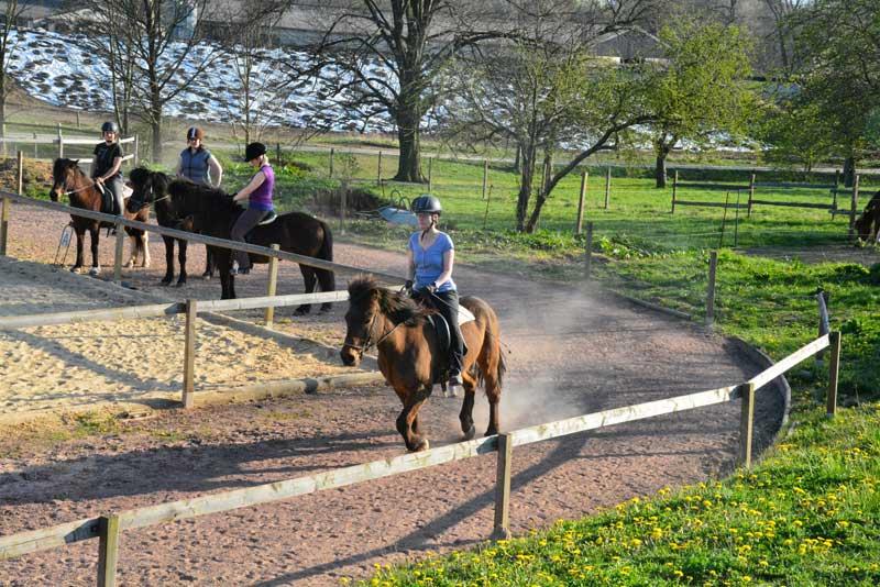 Reiterferien für Erwachsene