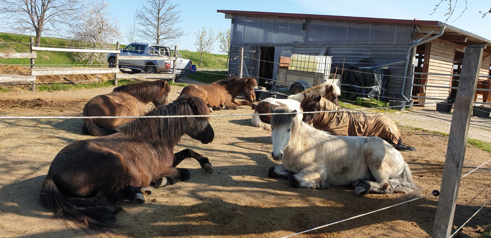 Pferdepension Gotha: Islandpferdehof Domäne mit kompletter Betreuung inklusive Tierarzt, Hufschmied, Auslauf und Beritt für Ihre Pferde